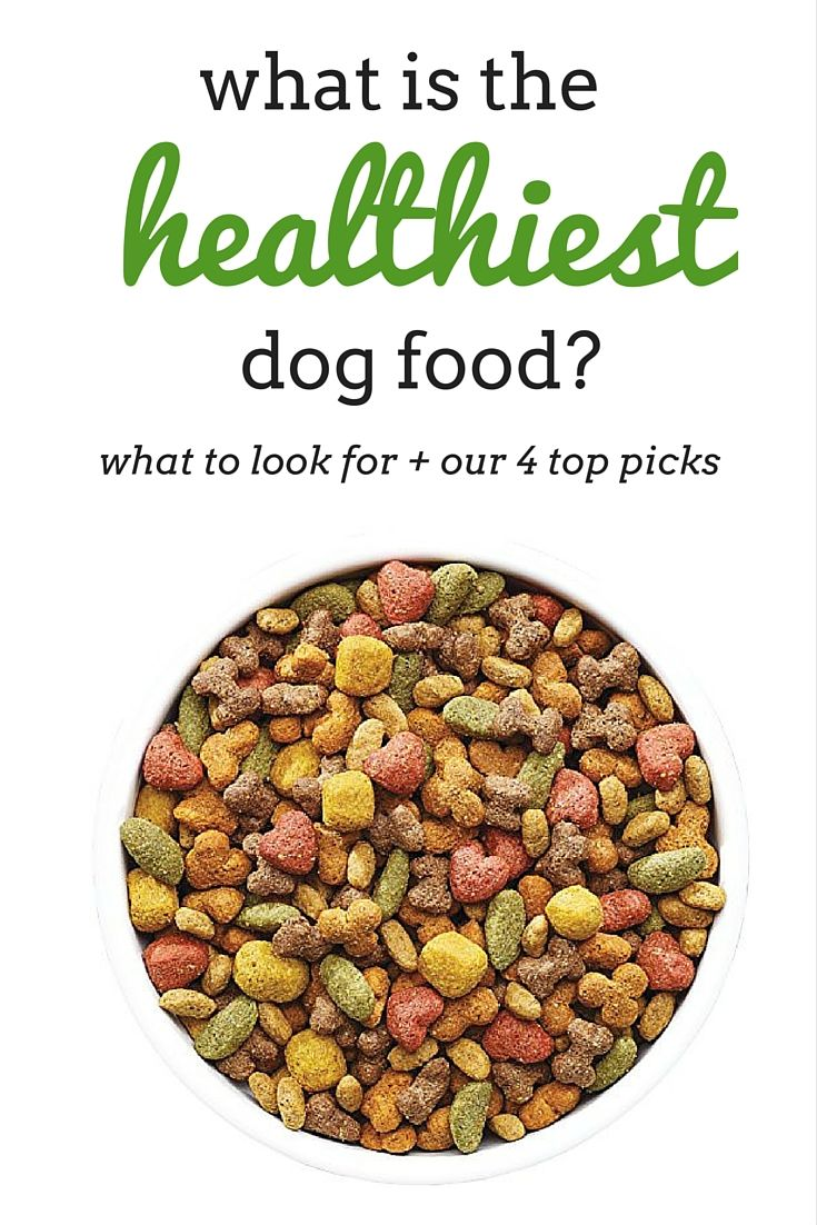 What is the healthiest dog food brands?