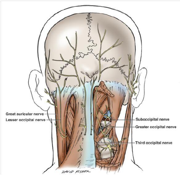 Repeated Nerve Supraorbital, Infraorbital, and Occipital Nerve ...