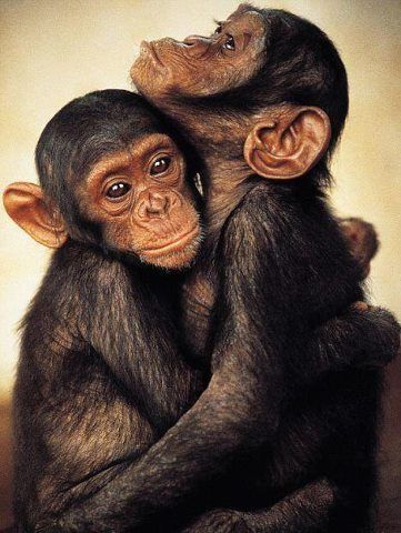 Affe auf einem Stock Sex