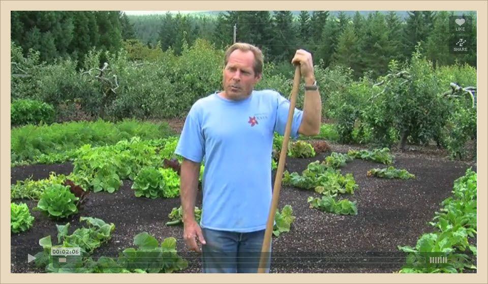 Back To Eden Gardening Film Gardening Blog Survival Gardening