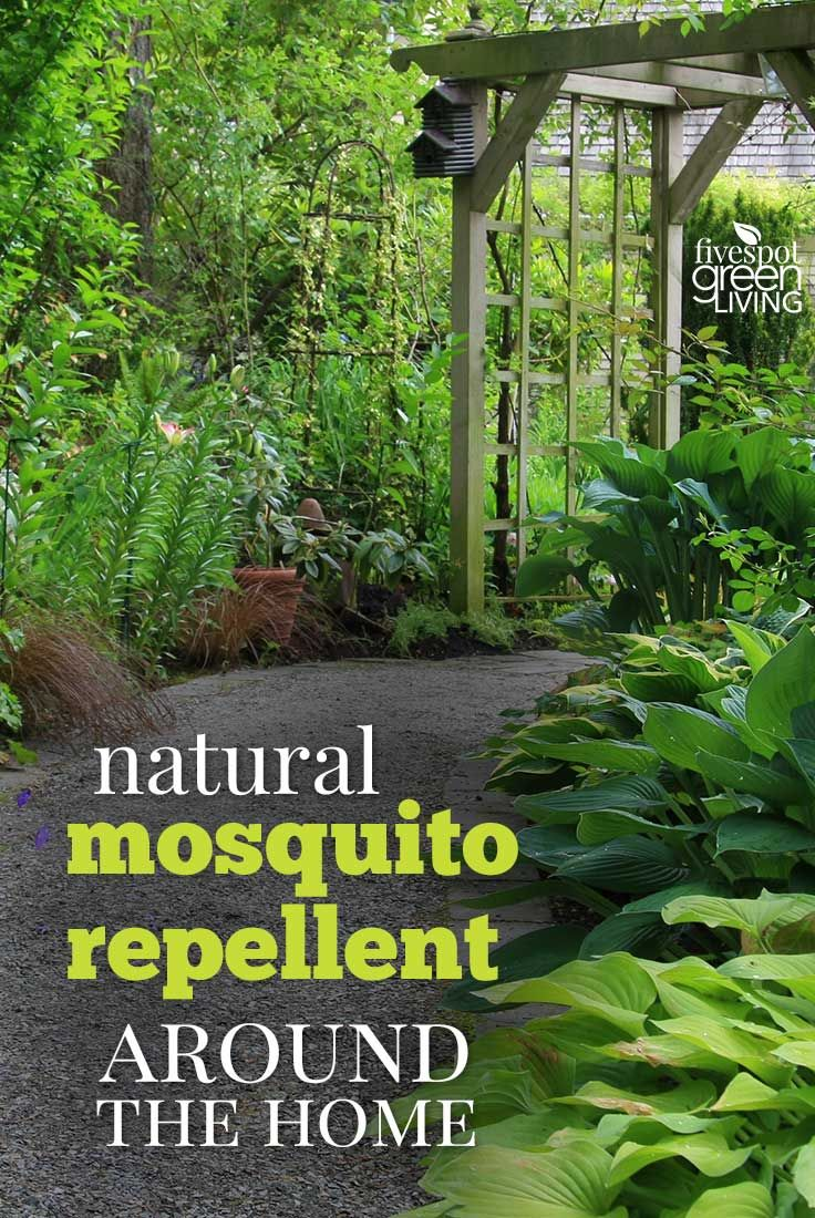 There Are Things You Can Do To Create An Area Less Attractive To Mosquitos.  Here Are Some Ways To Create Natural Mosquito Repellent Around The Home.