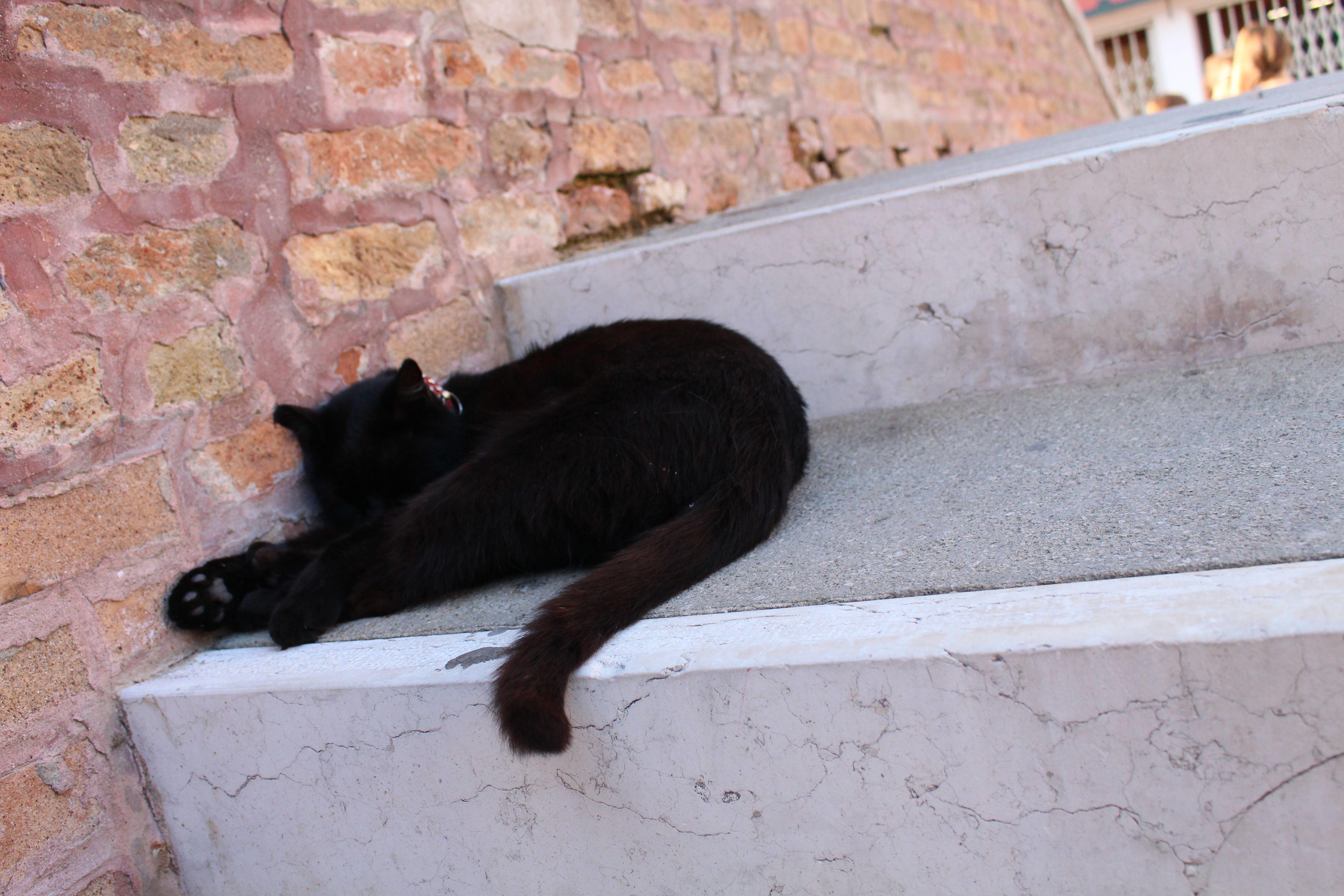 it's a big black kat - een groote zwarte kat in Murano, Venetië,  Italië :)