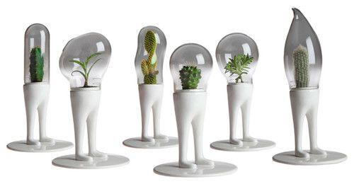 Eclectic Plants