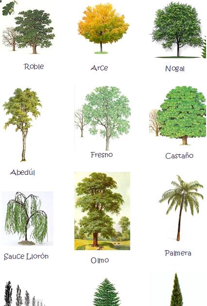 Primaria rea conocimiento del medio los tipos de for Arboles de hoja perenne para jardin