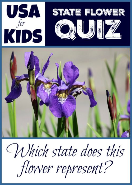 Which State Is Represented By The Iris Usa State Flowers