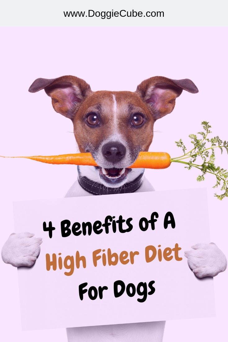 4 benefits of a high fiber diet for dogs fiber for dogs
