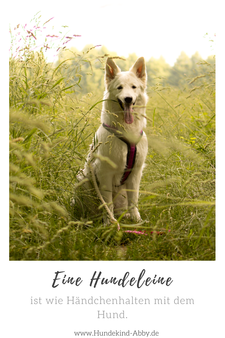 Warum Die Leine Etwas Tolles Ist Hunde Gesunde Hunde Und Rottweiler Hund