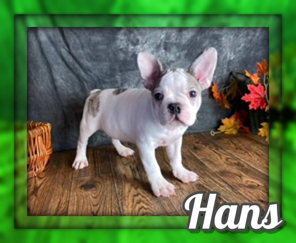French Bulldog Puppies For Sale Under 1000 Ohio 2021