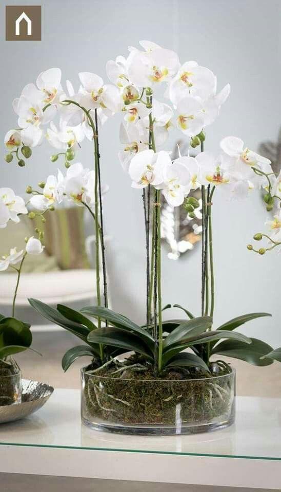 New Ideas Ikea Flowers Orchid Flower Arrangements Orchid Arrangements