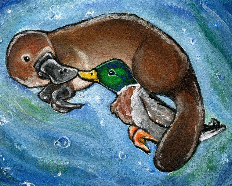 platypus print mallard duck perfect pair best friend wildlife decor nature