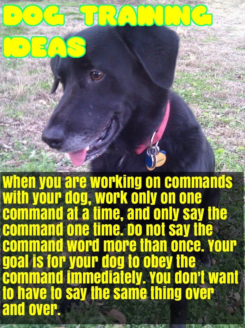 Enjoy A Healthy And Happy Dog With These Ideas Happy Dogs Dogs