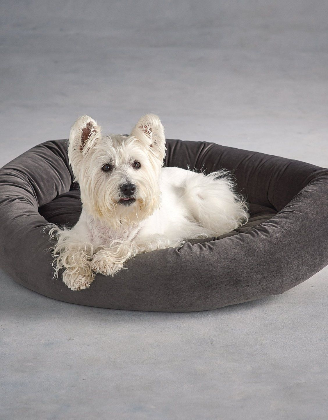 Ashton Donut Super Loft Fiber Pet Bed Pets, Your dog