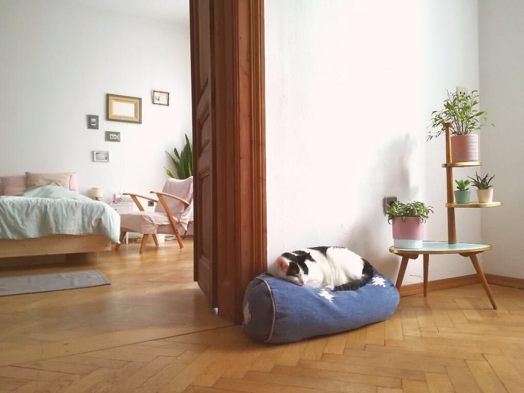 Kuschelbert Fredloves Lovecats Instacat Katerfred