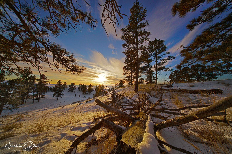 Perspective is Everything #1 Winter #dinosaurtattoos