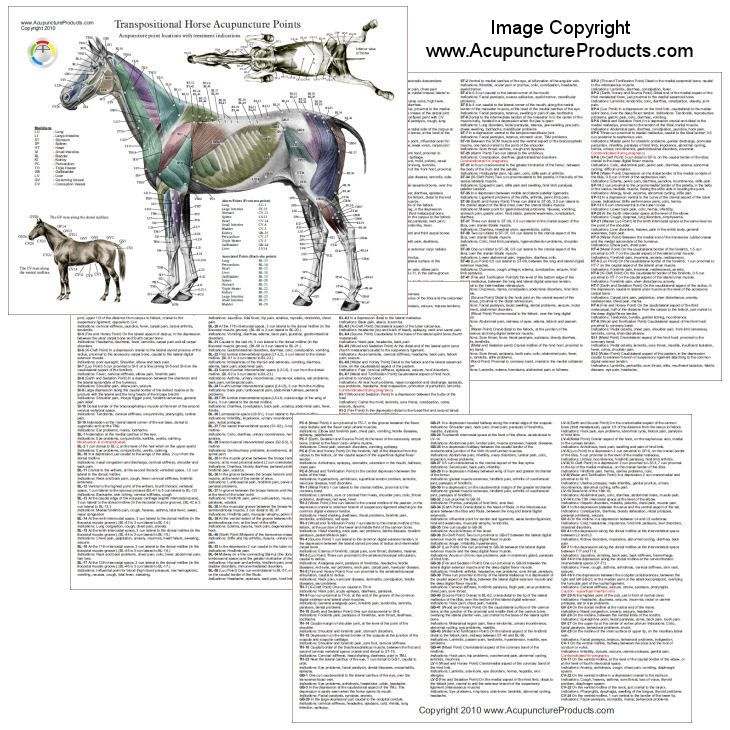 Horse Equine Acupuncture Meridian Points Chart   acupuncture maps ...