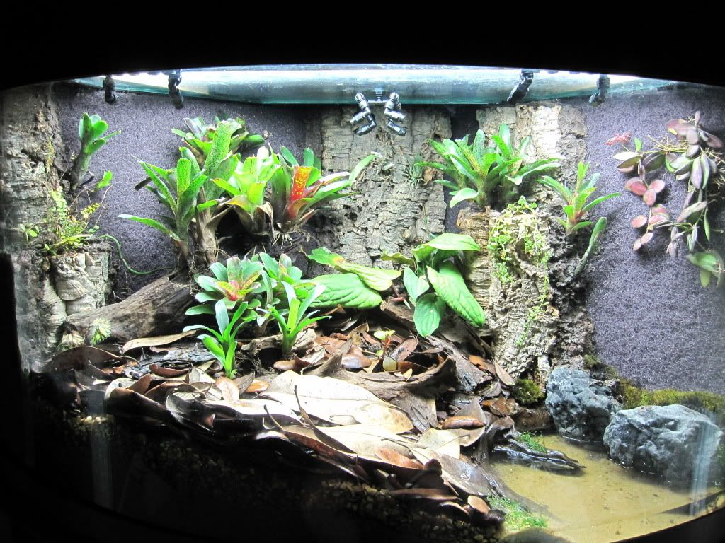 92 gallon corner bowfront dart frog forum on husbandry for Fish tank terrarium