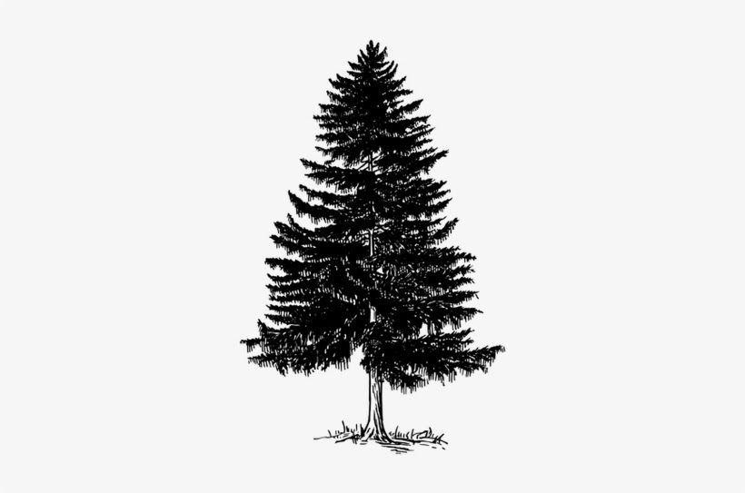 Pin Di Tree Png