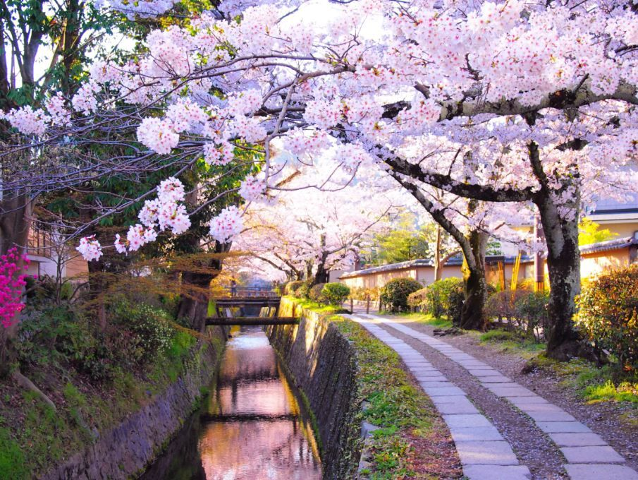 Cherry blossom forecast 2019 Japan — The dates & top 10 ...