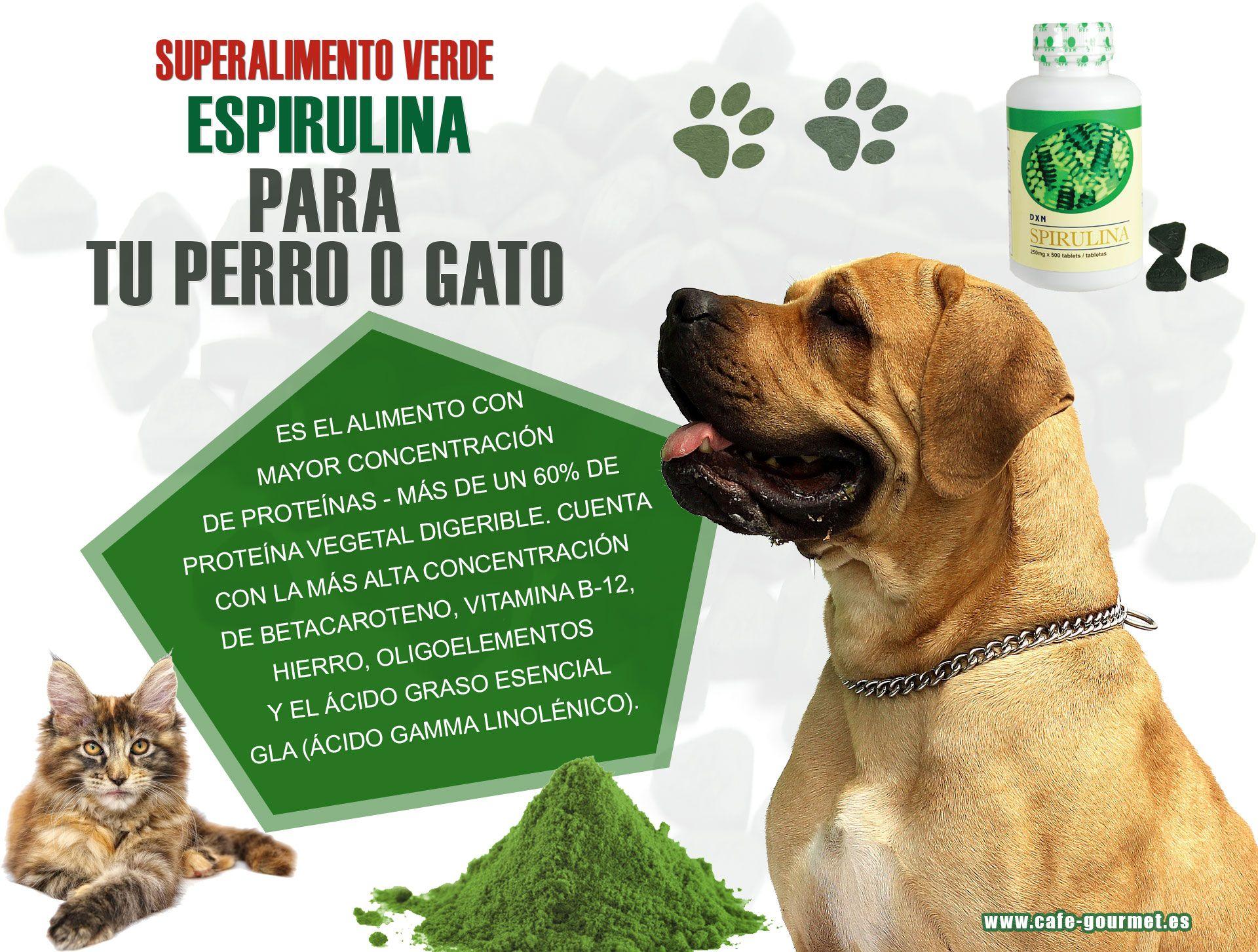 como fortalecer el sistema inmunologico de un perro