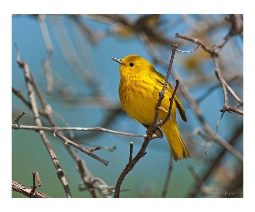 Corporate responsibility canadian animals ontario birds