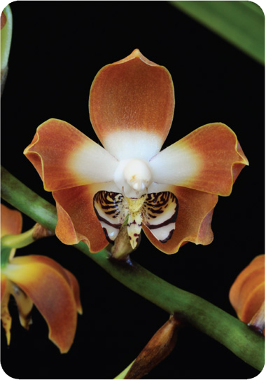 Orchid Photo Cards Living Tree Orchid Essences Flowers