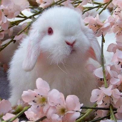 Die roten Kulleraugen und das rote Stupsnäschen des Hasis passen super zwischen die rosa Blütenzweige. ☺