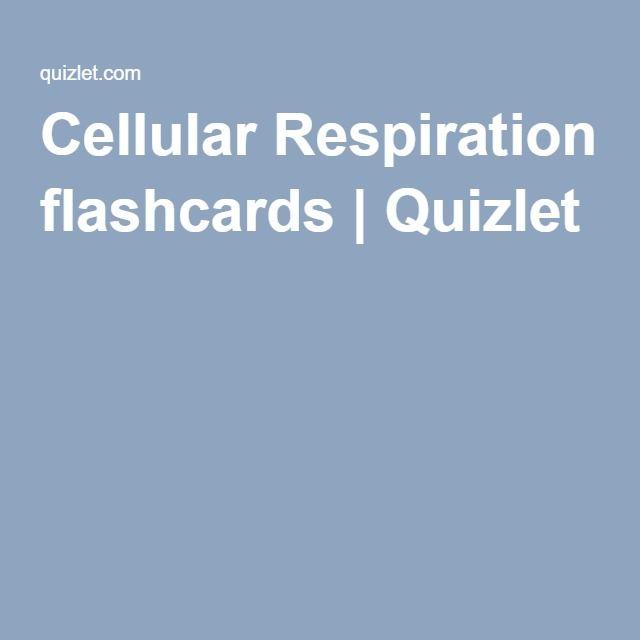 Cellular Respiration flashcards | Quizlet | Micro | Pinterest ...