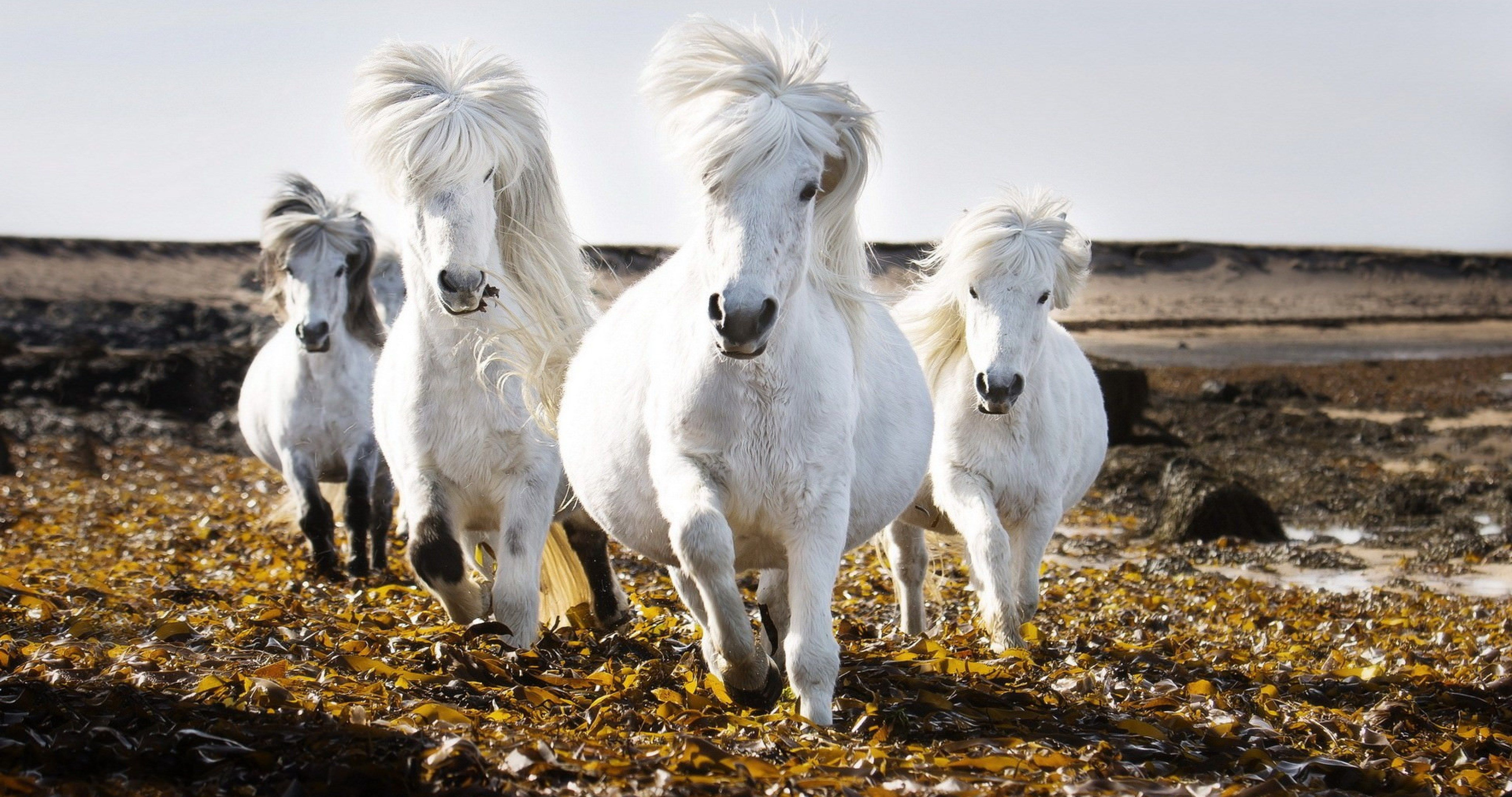 White Horses In Nature 4k Ultra Hd Wallpaper Horses White Horses Beautiful Horses