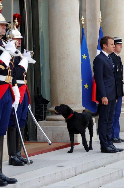 Emmanuel Et Brigitte Macron Les Coulisses De L Adoption De Leur Chien Chien Adoption Paris Match