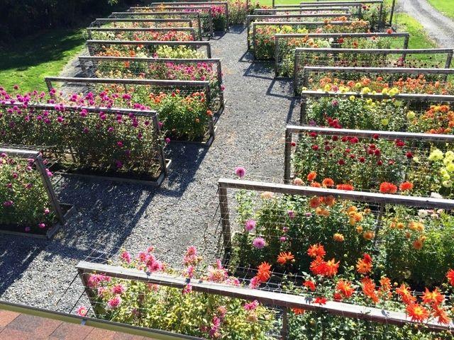 Pin On Flower Gardening Care