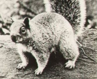 46++ How to field dress a squirrel info