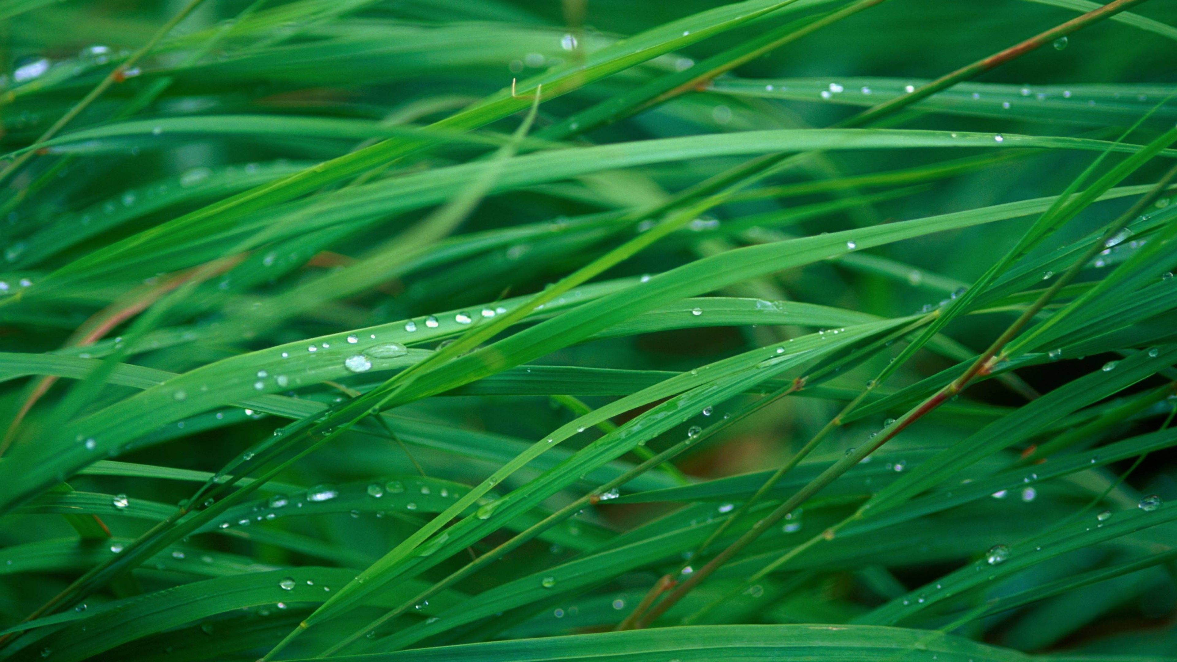 Grass 5k 4k Wallpaper Osx Green Dew 23922 Grass Wallpaper Grass Desktop Wallpaper