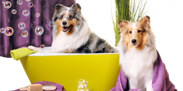 Per Grooming Is Essential For A Pet However Unlike Humans Not All Pets Require Regular Grooming The Grooming Varies From On With Images Pet Resort Pet Spa Dog Grooming