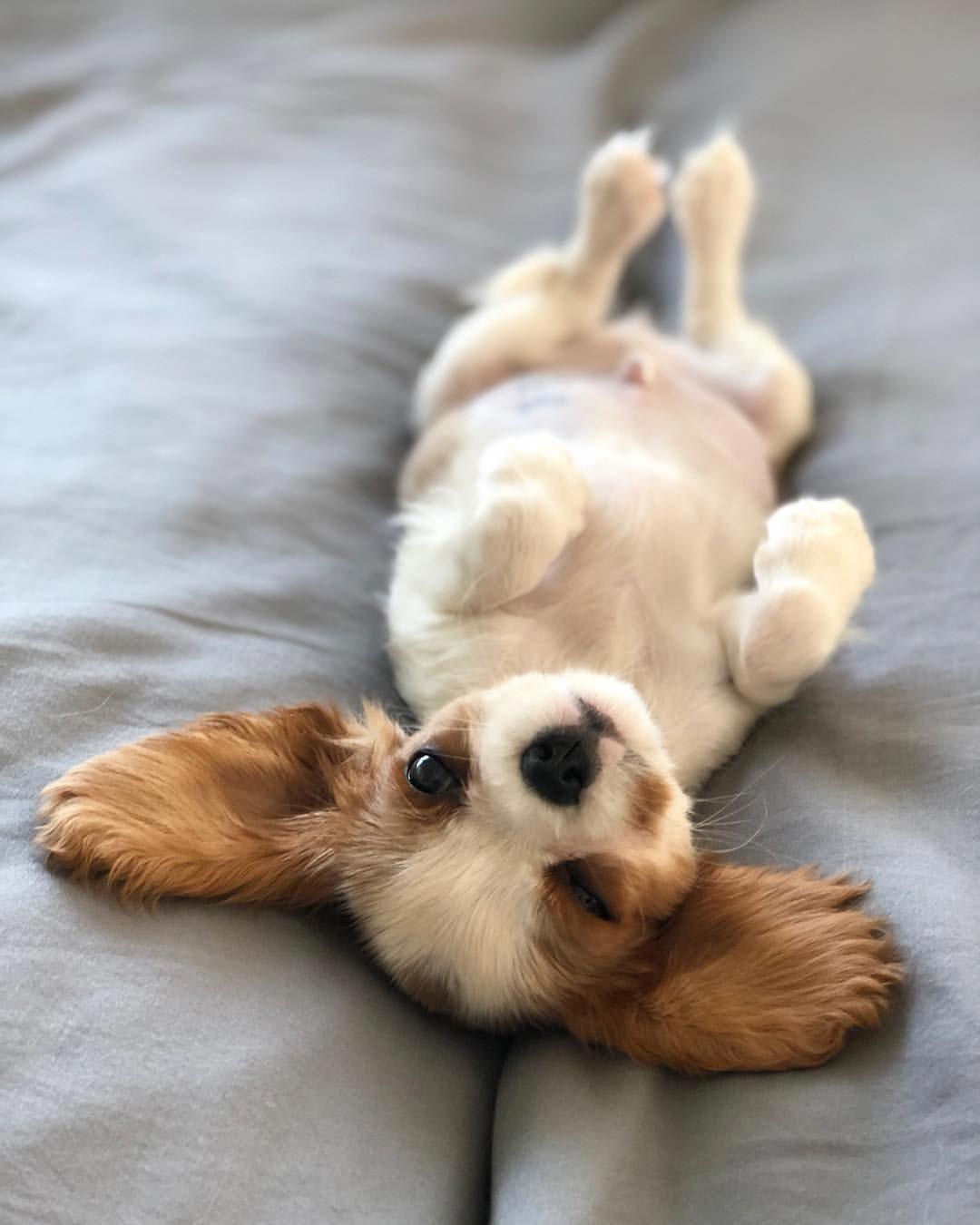 Мимимишные собаки фото