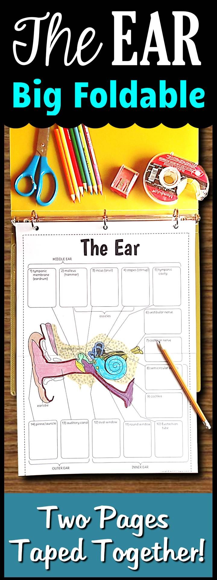 Ear foldable big foldable for interactive notebooks or binders the big ear foldable consists of two pages taped together there is minimal cutting involved to save you class time while providing an engaging foldable for ccuart Choice Image