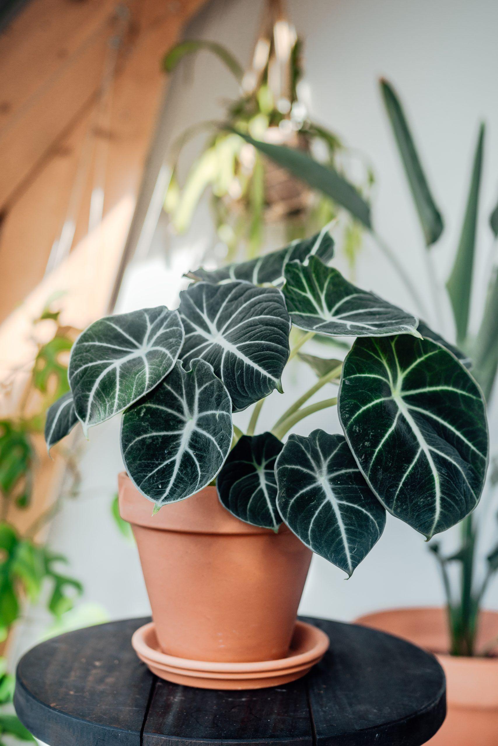 Rare Unusual House Plants