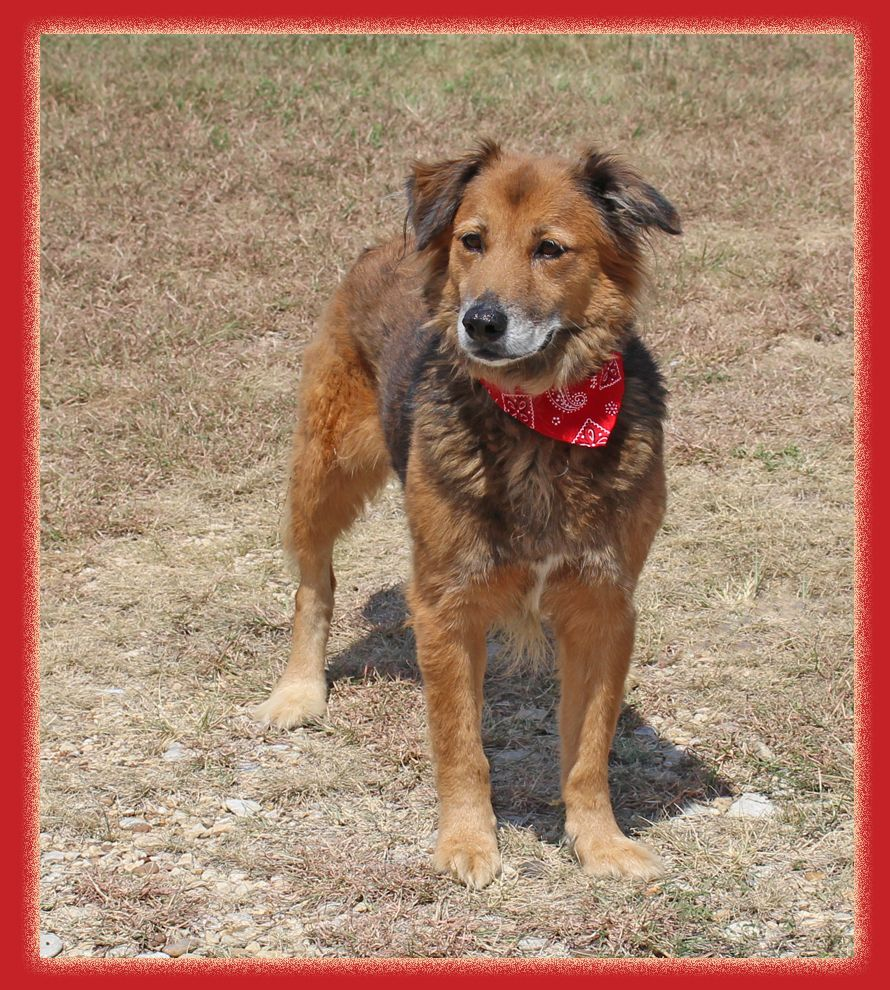 Adopt Charlie On Shelter Dogs Beautiful Dogs Save Animals