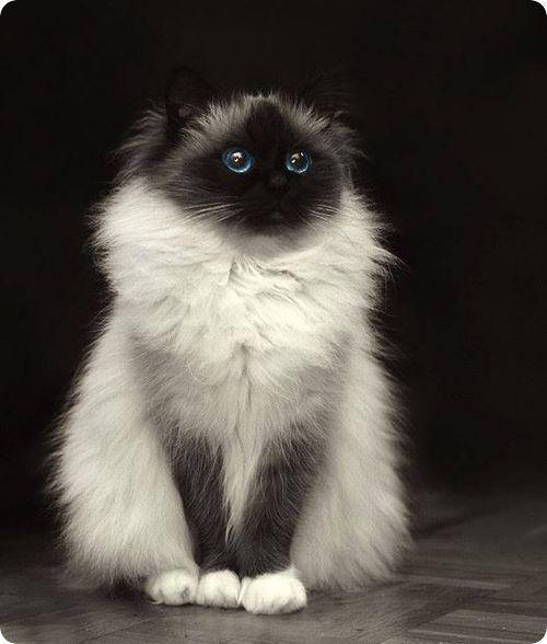 Pourquoi j'ai le blanc des yeux bleu