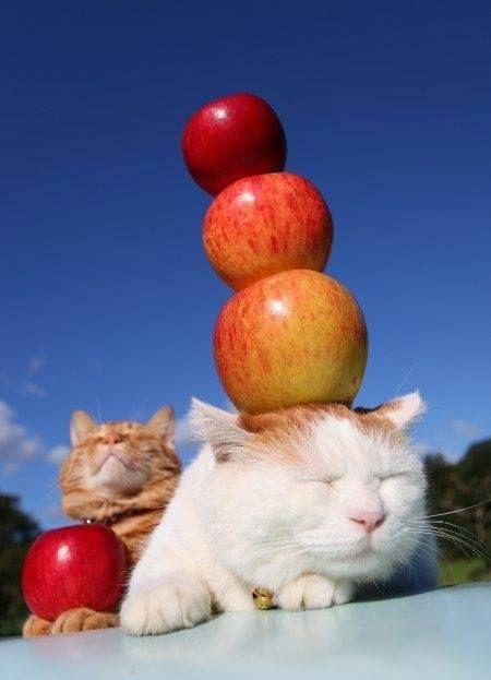 แนวหน า Good News แมว เป นส ตว ตลก Pretty Cats Cute Cats And Kittens Cute Cats