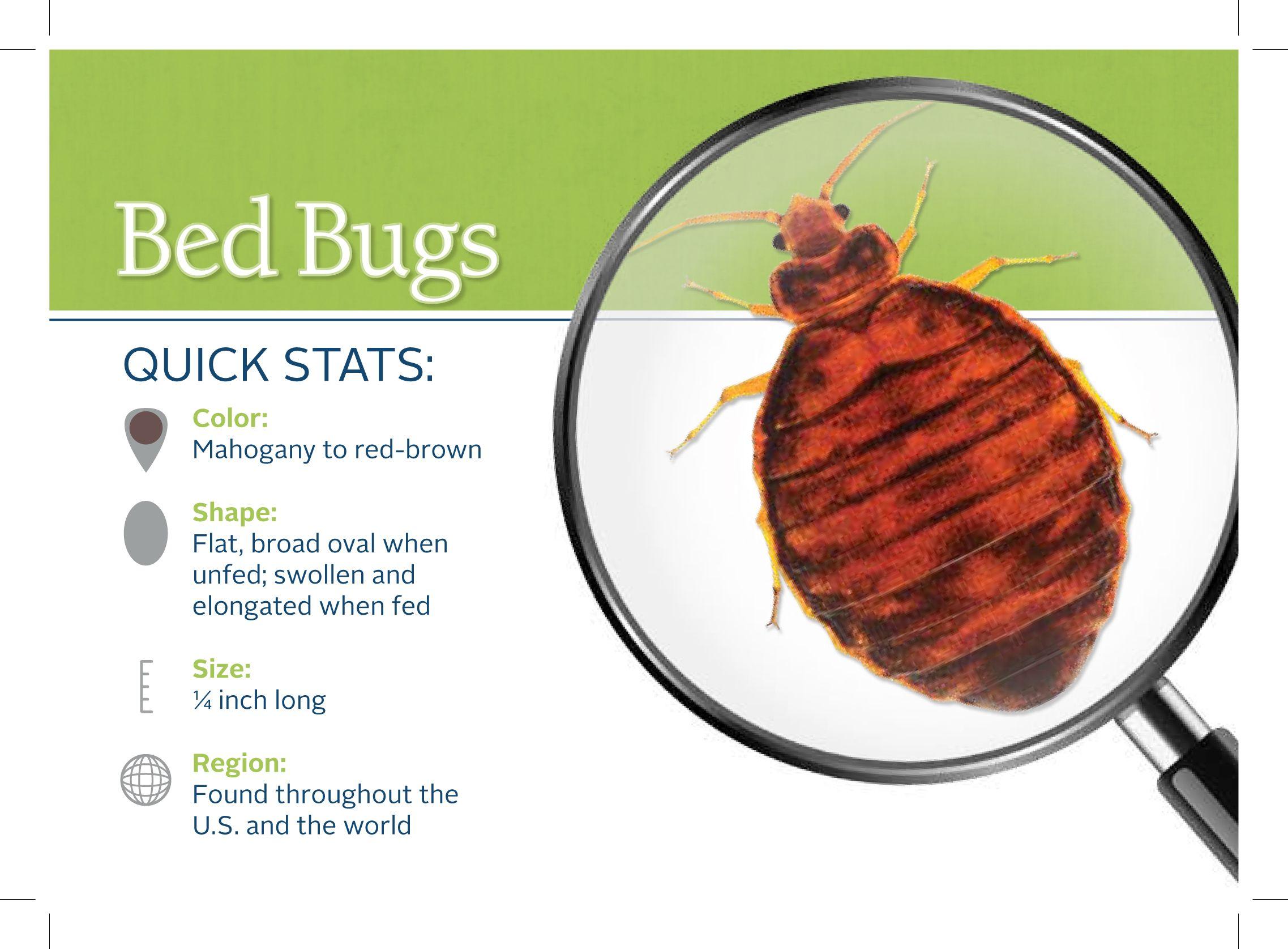 Bed Bug Hot Spots Bed bugs, Bed bug bites, Pest control