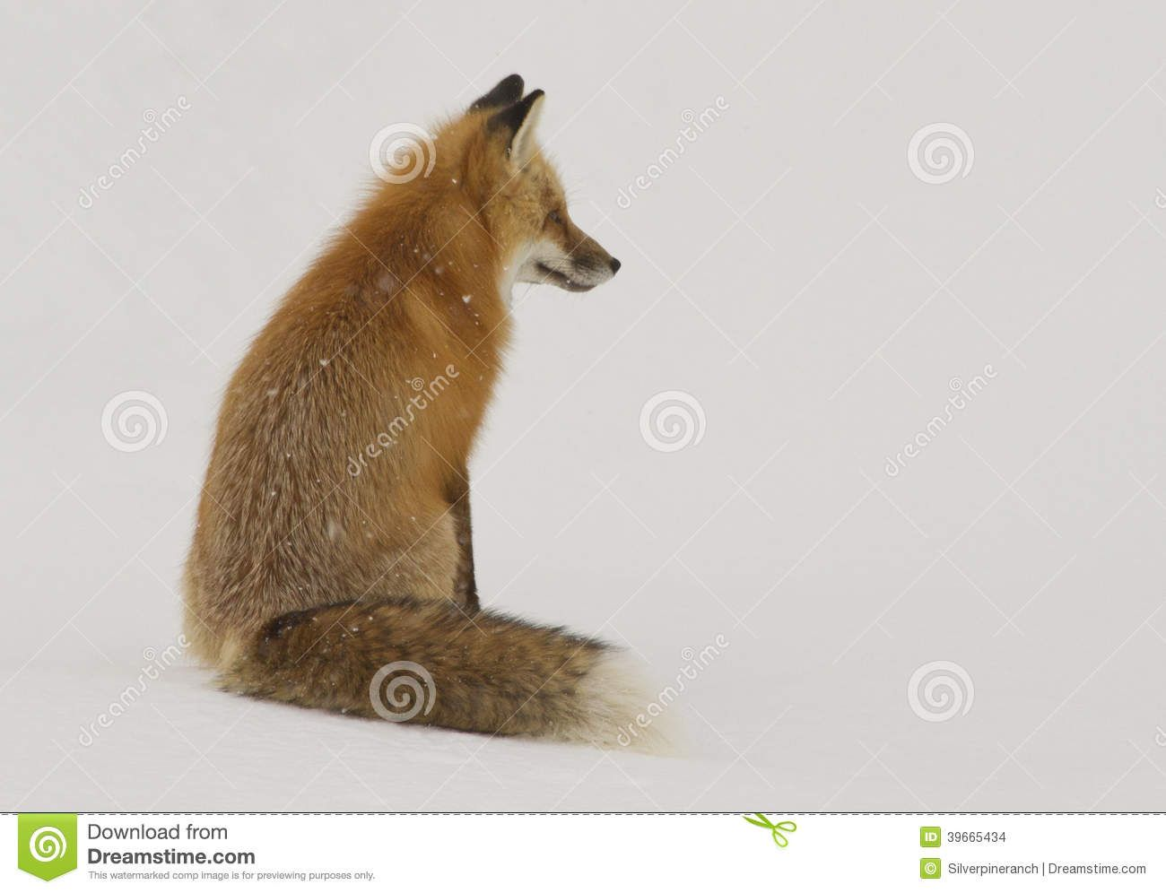 460 best foxes images on pinterest red fox foxes and fox