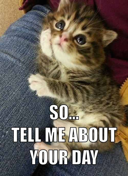 Top 35 Funny Cats And Kittens Pictures Funny Animals Funny Cat Dompict Com