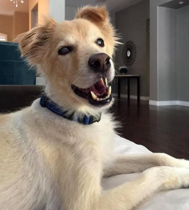 Adopt Astro Placed On Dogs Dogs Golden Retriever Dog Care