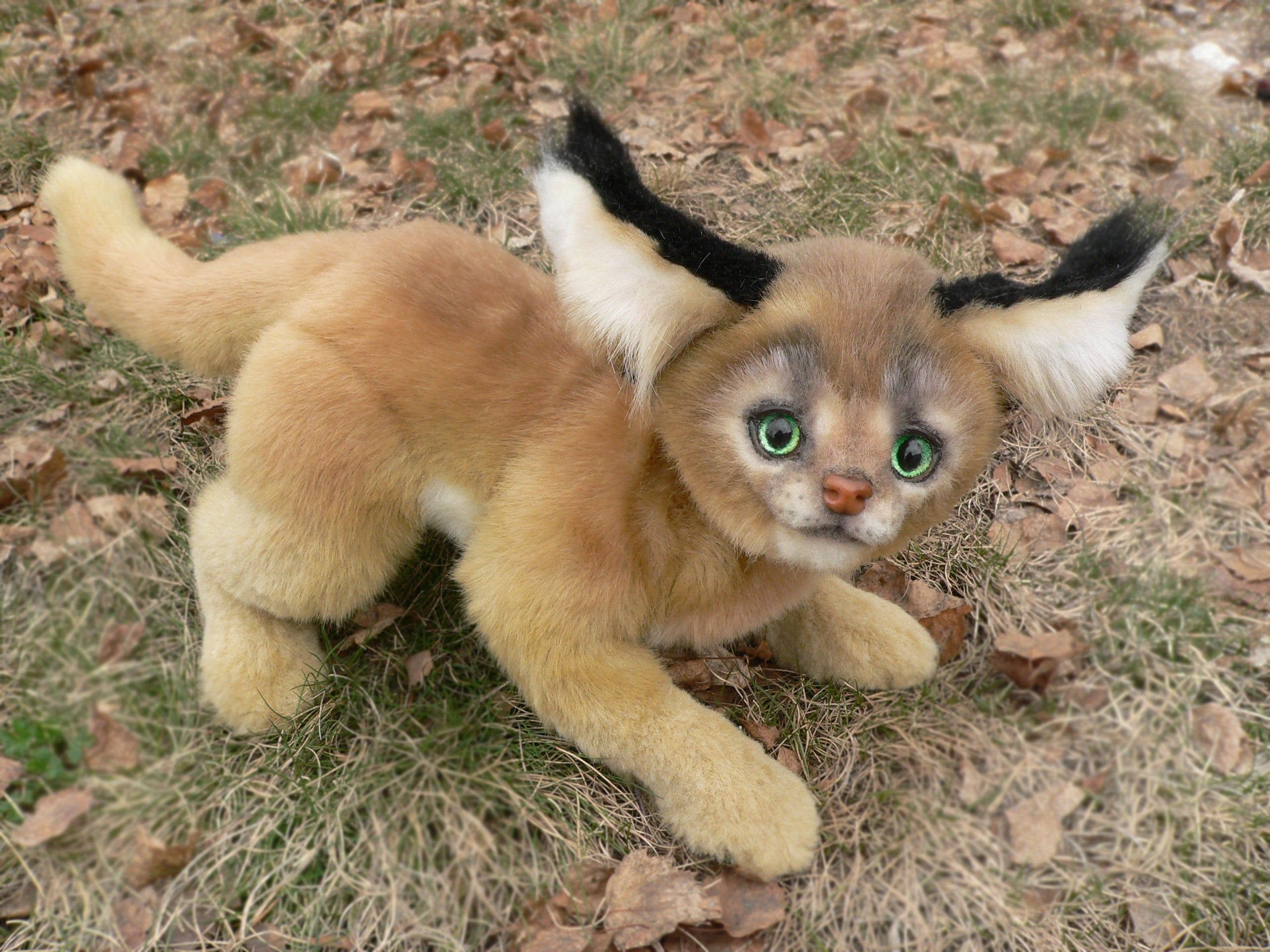 Caracal Steppe Lynx In Stock Caracal Caracal Cat Cats And Kittens