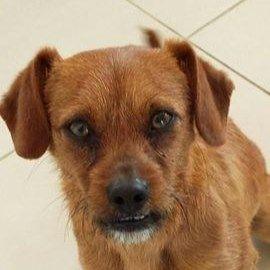 Pets For Adoption Pet Adoption Adoption Shelter Dogs