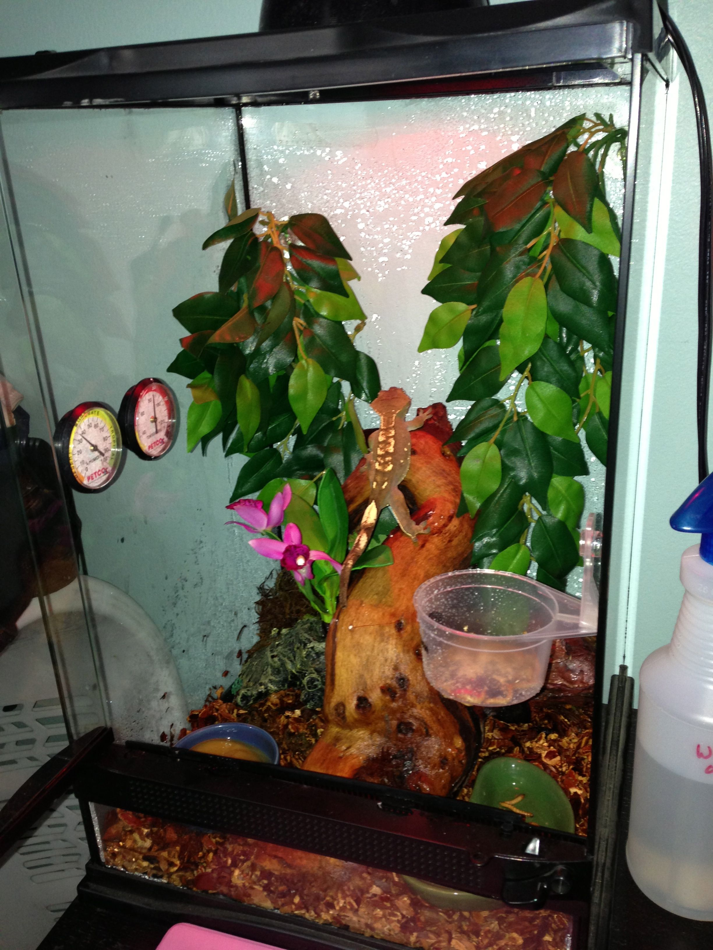I Want This Kind Of Setup For A Crested Gecko Habitat Ideas