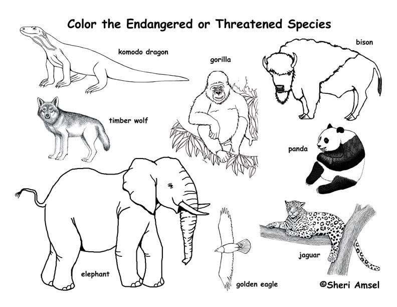 Free Download endangered animals coloring page exploring