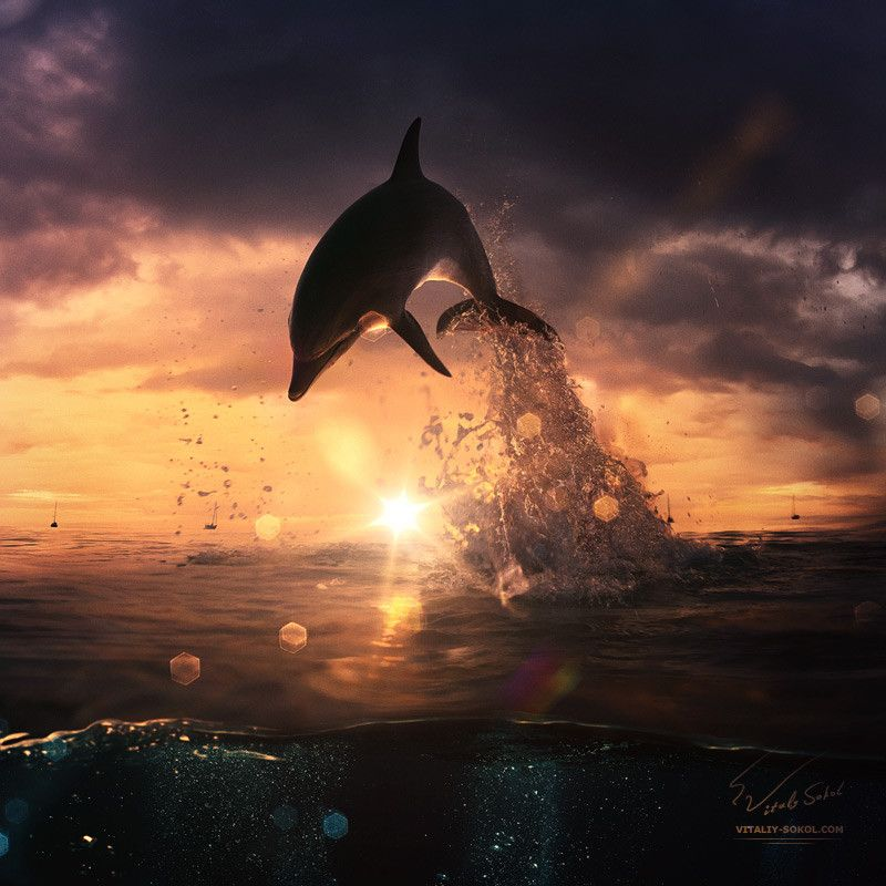 beautiful dolphin jumping from shining water by Vitaliy Sokol, via 500px