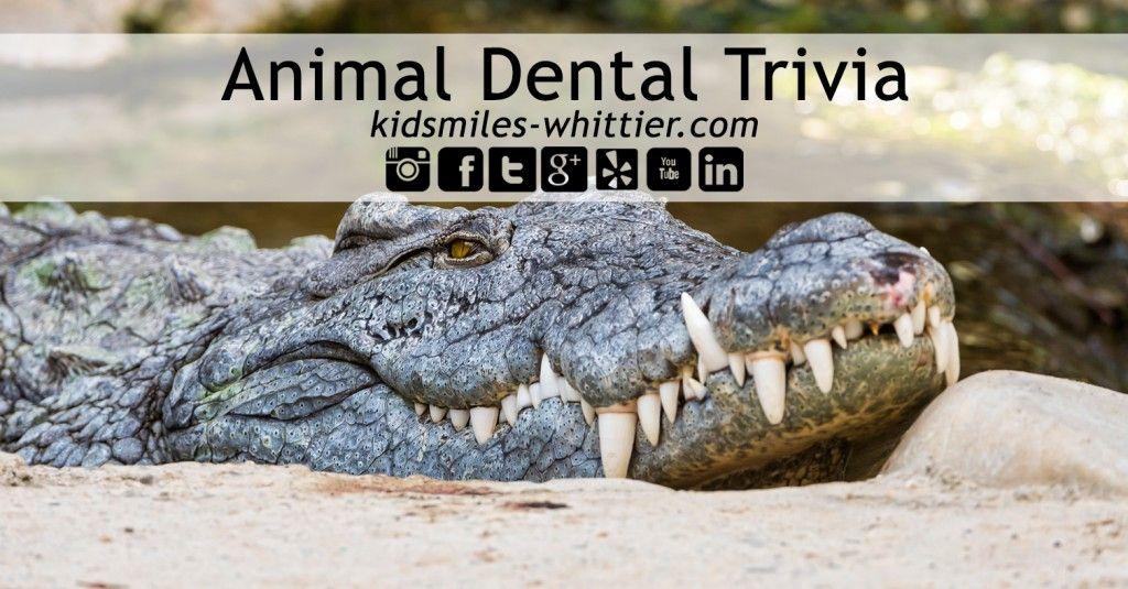 Animal Dental Trivia #DentistryIsFun #KidSmiles #KidSmilesWhittier #OralHealth #PediatricDentistry #Dentistry
