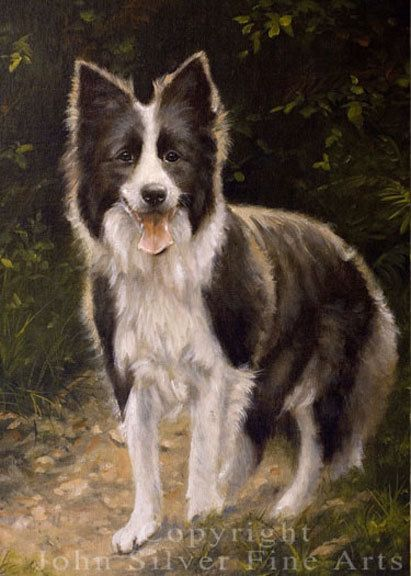 Aceo Dog Print Border Collie From An Original Painting By Award